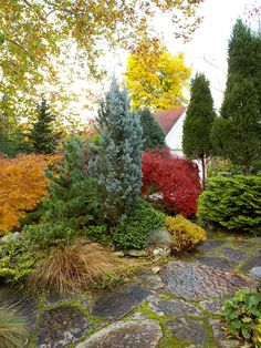 Repeat Plant Shapes - Build a theme in your landscape by repeating a particular plant shape. Here, an upright columnar white pine and blue spruce both echo the tall, narrow arborvitae in the background.To add interest, consider evergreens in various colors. Combining the blue-green pine, silvery-blue spruce, and dark green arborvitae creates another layer of attractiveness.