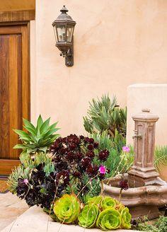 """Suculentas são umas plantinhas graciosas. Possuem diferentes e lindos formatos, e são tradicionalmente originárias de clima árido, de regiões desérticas. São a planta ideal para quem não quer ter muito trabalho, porque como elas """"estocam"""" muita água, precisam de pouca manutenção. Essa casa é de Suzy Schaefer, em San Diego, que passou por um grande […]"""