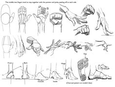 Human Anatomy Sketches  || CHARACTER DESIGN REFERENCES |