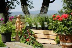 O ziołach, ich rodzajach, odpowiedniej pielęgnacji i zastosowaniu w kuchni.