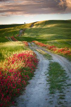 Dreamland Tuscany [Toscana] in spring by Reinhold Samonigg