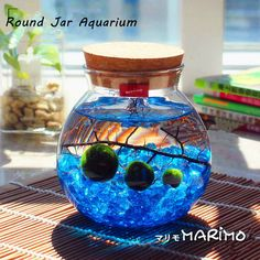Marimo Aquarium Kit With 4.4 Round Terrarium/3 Marimo balls/marimo... ($28) ❤ liked on Polyvore featuring home, home decor, grey, home & living, home décor, round bowl, grey home decor, ball jars, round fish bowl and round jars