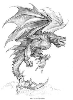 Goat Hunt by KatePfeilschiefter on DeviantArt Fantasy Drawings, Art Drawings Sketches, Fantasy Art, Animal Sketches, Animal Drawings, Twins Tattoo, Dragon Tattoo Drawing, Dragon Anatomy, Dragon Sketch