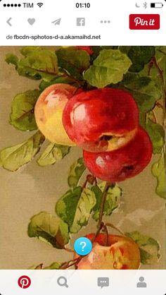 Frutas maçã