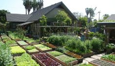 family produces 6000 pounds of food growing food on acre of land high yield urban farming los angeles permaculture local food in los angeles urban gardening locavore movement Farm Gardens, Outdoor Gardens, Garden Farm, Veggie Gardens, Family Garden, Herb Garden, Big Garden, Garden Pond, The Farm