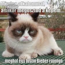 Grumpy Cat is no longer a fan of Mayans Meme Grumpy Cat, Cat Memes, Grumpy Kitty, Kitty Kitty, Portal Pop, Crazy Cat Lady, Crazy Cats, Shih Tzu Dog, Cat Wallpaper