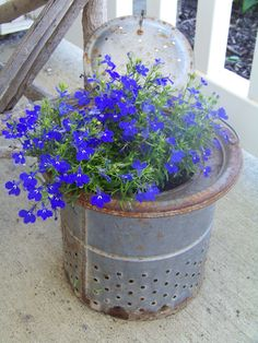 An old minnow bucket used as a planter. I have my grandpa's!!