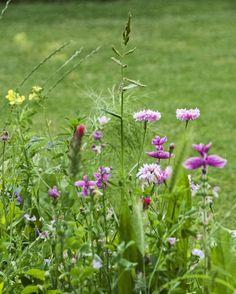 tuindroom, romantische bloemenweide, Home and Garden