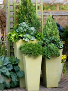 Beautiful and Edible--You don't have to have a large space to have a beautiful garden. In this photo, a gorgeous container garden displays a variety of horticultural riches: deciduous shrubs that lend year-round appeal are interplanted with a crop of cabbage and kale. Matching containers pull the look together.