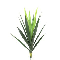 Sonoran Highlands Flax Plant (Set of 3)
