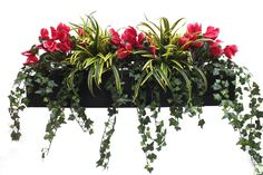 Our artificial Cyclamen and Dracaena window box is the perfect display for brightening up you outdoor area or home& exterior. This display uses planting that wouldn't look out of place all year since cyclamen naturally bloom in summer and winter. Window Box Plants, Window Box Flowers, Window Boxes, Fake Flowers, Flower Boxes, Artificial Flowers Outdoors, Artificial Flower Arrangements, Artificial Plants, Balcony Flower Box