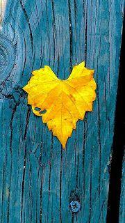 Wallpaper yellow heart 19 New ideas Heart In Nature, Heart Art, Golden Heart, I Love Heart, Happy Colors, Mellow Yellow, Blue Yellow, Yellow Leaves, Blue Gold