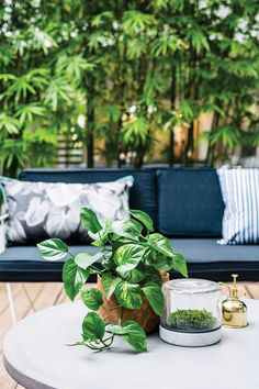 Outdoor styling: A stylist's top tips for summer - The Interiors Addict Bamboo Wall, Bamboo Hedge, Back Gardens, Roof Gardens, Small Gardens, Outdoor Furniture Sets, Outdoor Decor, Indoor Outdoor, Garden Features