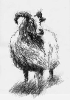Drawing Doodles Sketches - A wonderfully wind swept and wild sheep Animal Sketches, Animal Drawings, Cute Drawings, Art Sketches, Hipster Drawings, Drawing Faces, Manga Drawing, Pencil Drawings, Sheep Drawing