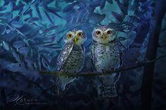 Les magnifiques photos de chouettes de Sompob SasiSmit  2Tout2Rien