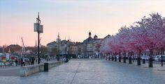 30 trucs à faire à Bordeaux au printemps