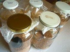 Gallon-sized jars of grain