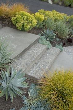 both polished + exposed aggregate concrete stairs for modern pathway. Love the surrounding plants!