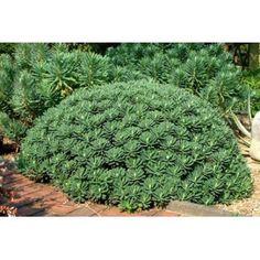 Plantation, All Plants, Ecology, Portuguese, Outdoor Gardens, Succulents, Velvet, Outdoor Decor, Ajouter