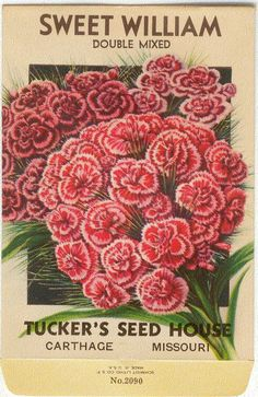 Vintage Flower Seed Packets | Vintage Flower Seed Packet Tuckers Lithograph SWEET WILLIAM