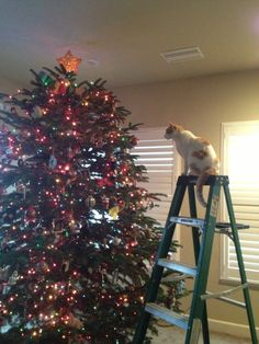 My Cat Nemo Plotting To Jump In The Christmas Tree 2012 I Can Just See My Cat Doing This Same Thing Cat Christmas Tree Christmas Cats Christmas Tree