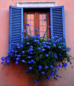 Electric blue window-box garden