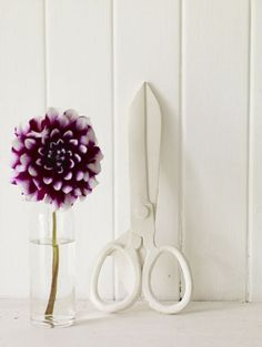 Plaster cast scissors: Pale & Interesting