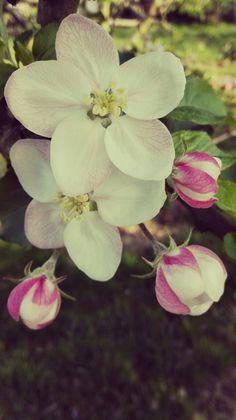 Spring#
