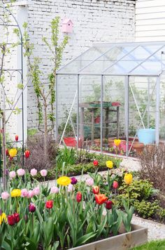 in my someday house, i will have a greenhouse like this one. and lots and lots of tulips in the spring.