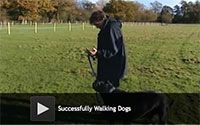 Tips for Successfully Walking Your Dogs - Victoria is about to introduce a few techniques which should have Pugsley feeling a little…