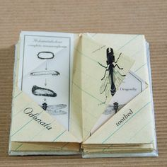 Artist Book about Insect Orders by PurplebeanBindery on Etsy, $35.00
