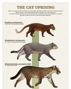 The Casual Paleoartist • Evolution Series: The Cat Uprising Today, cats...