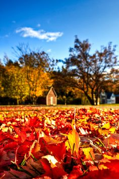 Autumn Leaves |Boothbay Railway Village, a historical and cultural museum on Route 27 in Maine.   Copyright © Kay Gaensler ...