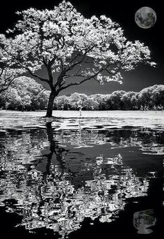 Absolutely beautiful black and white photo of tree and moon reflection. Absolutely beautiful black and white photo of tree and moon reflection. Black White Photos, Black And White Photography, White Picture, Landscape Photography, Nature Photography, Female Photography, Infrared Photography, Photography Tips, Moonlight Photography