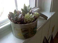 Succulent vase idea