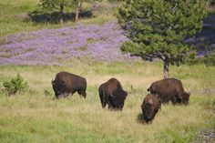 Both Custer State Bark and Black Hills National Forest sit near this township.   - CountryLiving.com