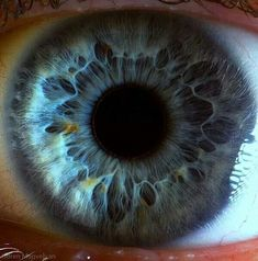 The eyes have it: The iris pictured in remarkable detail by incredible close-up…
