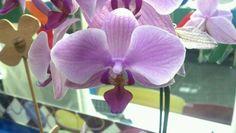 Orquídeas no laboratório de informática Laranjeiras