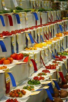 4-H Country Fair entries.