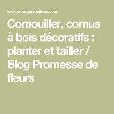 Cornouiller, cornus à bois décoratifs : planter et tailler / Blog Promesse de fleurs
