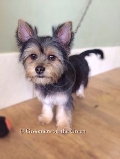 29 best dog grooming images on pinterest dog grooming dog first visit for this little pup solutioingenieria Image collections