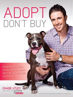 """With the rise in prominence of rescue organizations and the high profile promotion of such slogans as """"Adopt, Don't Shop"""", it  becomes important to decipher exactly what it is rescues and shelters are talking about, and what, if any, their agenda is."""