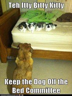 Funny Animal Memes – 25 Pics