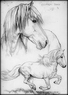 Icelandic Horse Sketch.. by darkangels280 on DeviantArt
