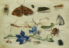 Jan van Kessel the Elder | Lot | Sotheby's JAN VAN KESSEL THE ELDER ANTWERP 1626 - 1679 STILL LIFE OF MOTHS, INSECTS AND A PARMA VIOLET Signed with initials [f.]v.k (lower left) (see note) Oil on copper laid on panel 3 3/8 by 5 in. 8.6 by 12.7 cm