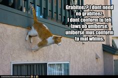 funny cat pictures - Lolcats: Wut grabiteez?
