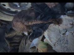 Mossul ein Massengrab - Nach Monaten noch immer mit Leichen übersät und ...