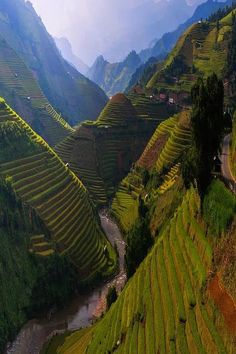 Rice Terrace. Mù Cang Chải District. Vietnam.