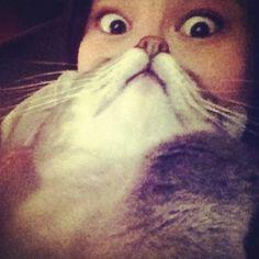 Barba de gato