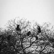 Tracking Instincts | krazywithtravel African Wild. Sabi Sand. Kruger National Park. Baboons Summit Lake, Spring Lake, Kruger National Park, Baboon, African Safari, Narnia, Serenity, Trail, Wildlife